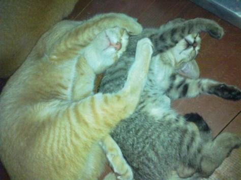 【猫画像】シンクロ率90%