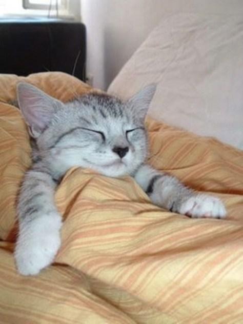 【猫画像】爆睡
