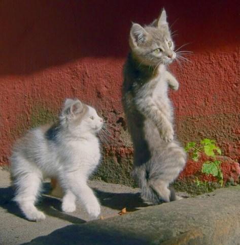 【猫画像】ダンシング猫