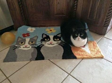 【猫画像】一つはホンモノ