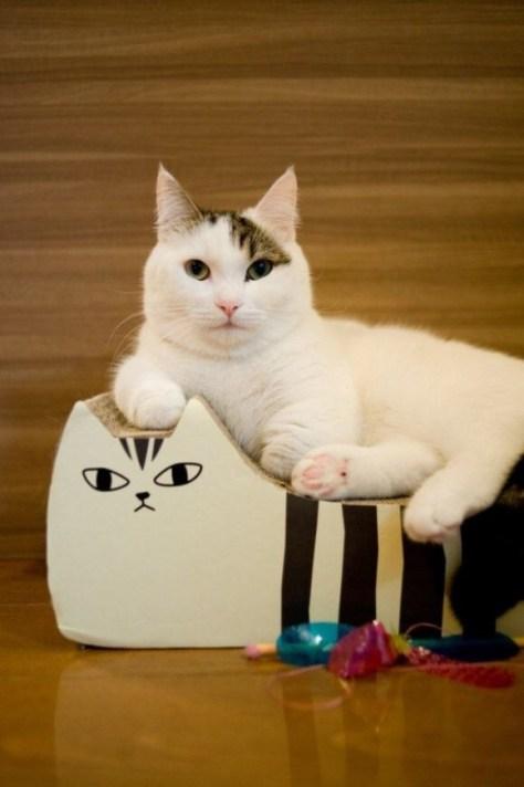 【猫画像】猫の上にネコ