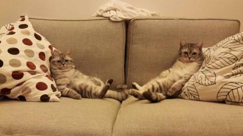 【猫画像】ようこそ