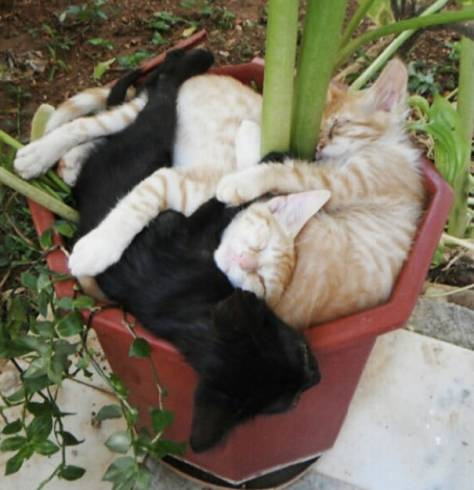 cats_in_plants03
