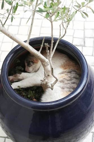 cats_in_plants06