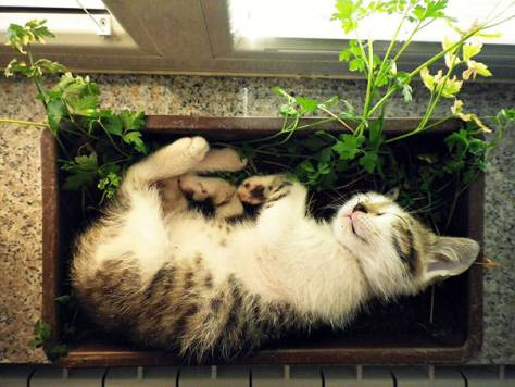 cats_in_plants07