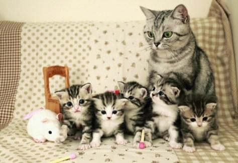 【猫画像】集合写真
