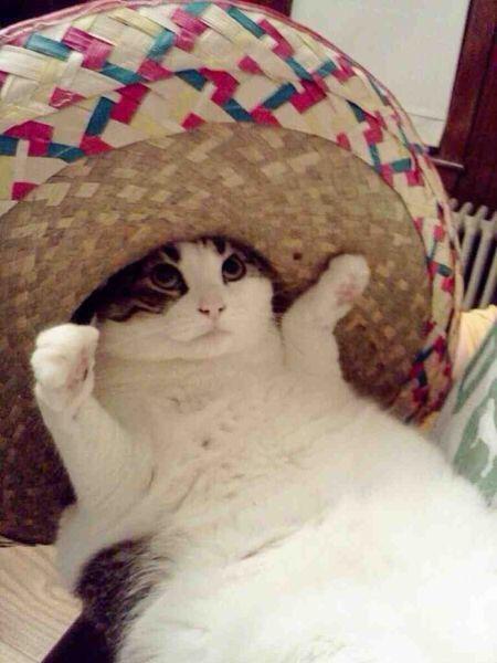 【猫画像】ちょっと陽気なあいつ