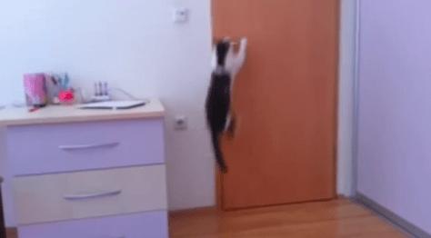 cat_opens_5doors02