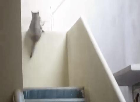ninja_mum_cat05