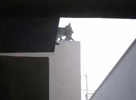 ninja_mum_cat07