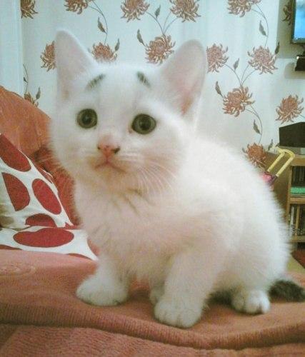 worried_looking_kitten03