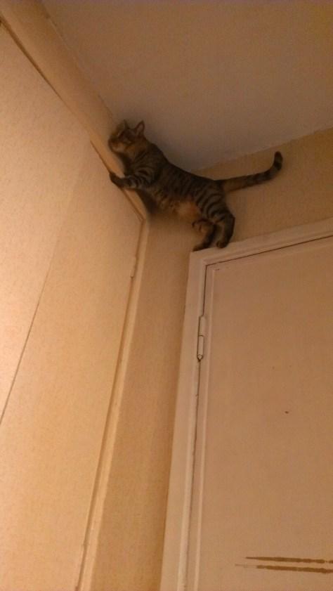 【猫画像】一体どうやって・・・!?