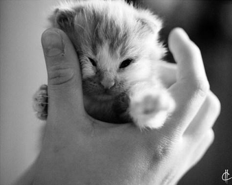 【猫画像】ムギュッ!