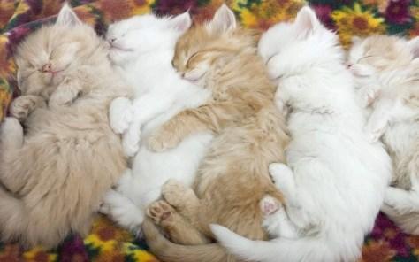 【猫画像】並んでぐっすり