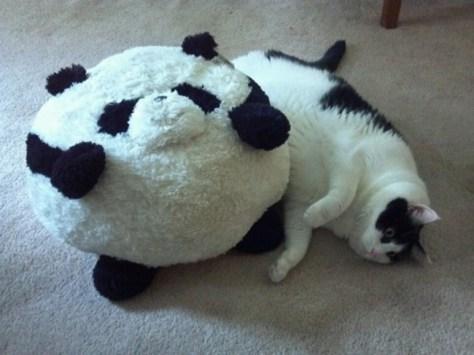 【猫画像】似たもの同士?