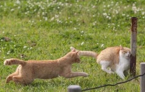 【猫画像】・・・イテッ!