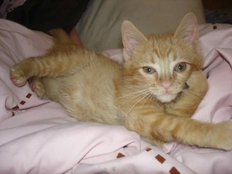 pro_posing_cats04