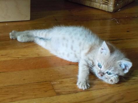 pro_posing_cats15