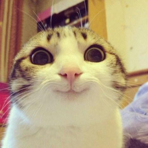 【猫画像】ニヤリ