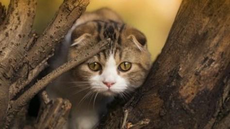 【猫画像】警戒class=