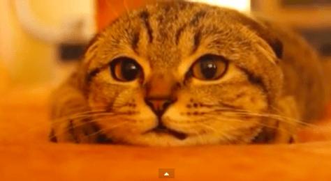 cat_get_ready04