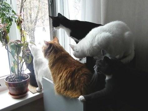 【猫画像】みんな気になる・・・