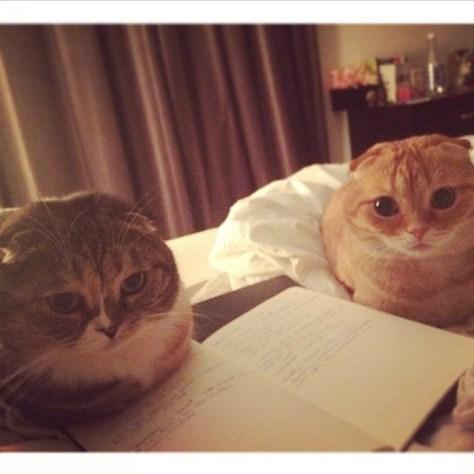 【猫画像】丸いのが2つ