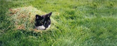 【猫画像】カモフラージュ?