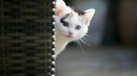 【猫画像】チラッ