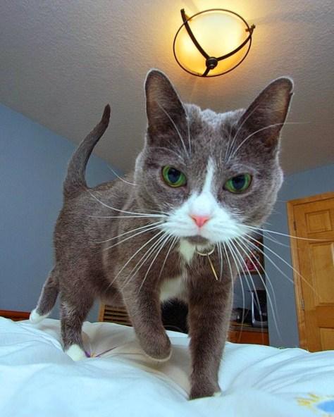 【猫画像】起きた時