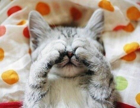 【猫画像】全然見えない・・・