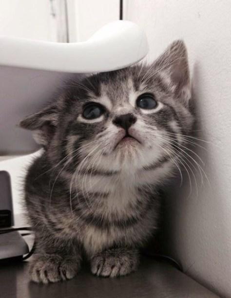 【猫画像】狭い所が好き?