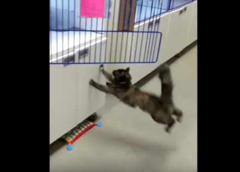 cat_cant_jump_from_waxfloor07