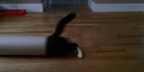 kitten_sliding_tube03