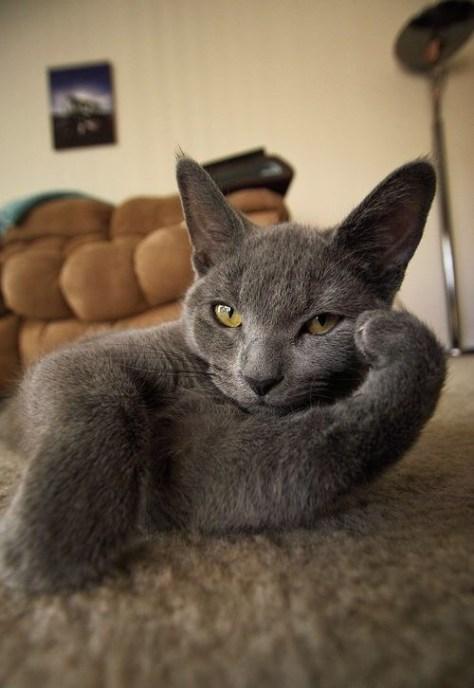 【猫画像】ワタシのここ、空いてますよ