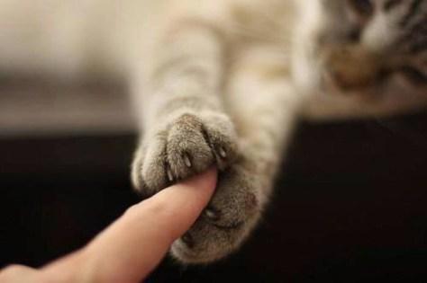【猫画像】キャッチ!