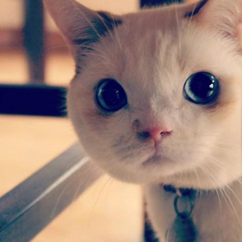 【猫画像】まる顏