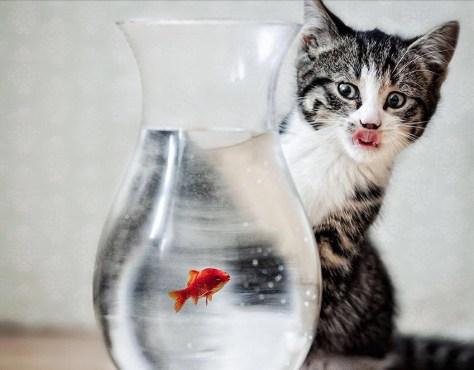 【猫画像】狙ってる!?