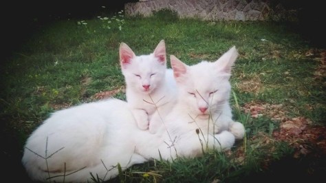 【猫画像】細目親子