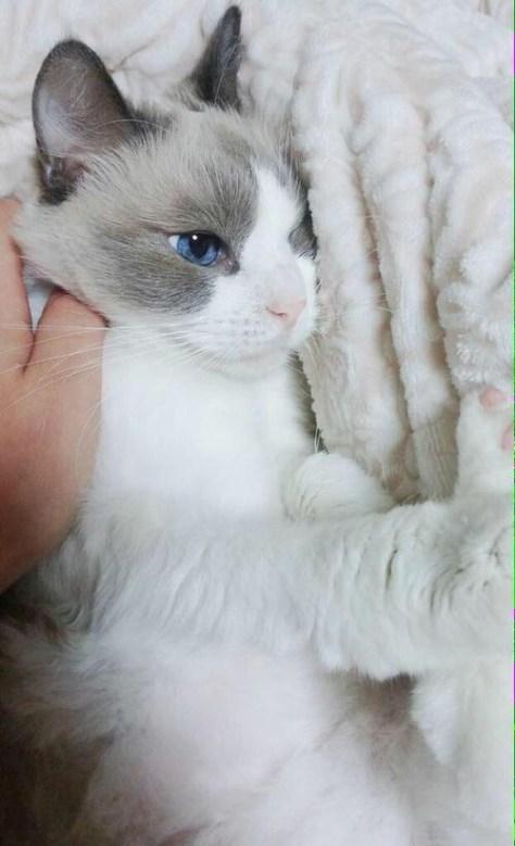 【猫画像】寝起き?