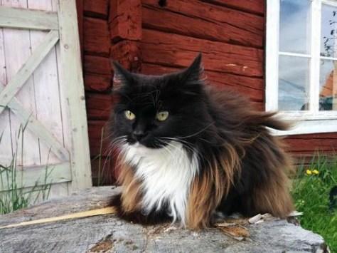【猫画像】オシャレな毛並み