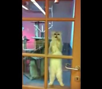 cat_dance05