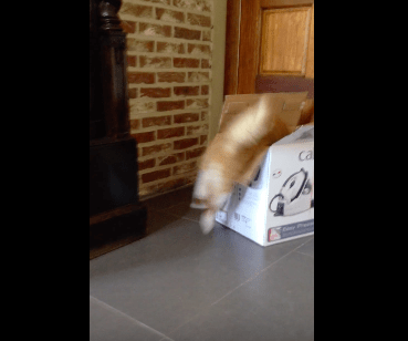 cat_moves_box04