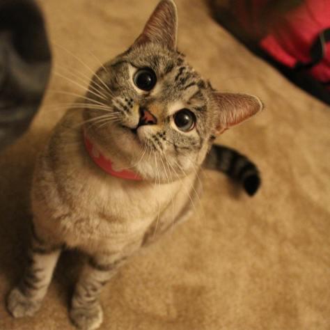 cat_nala