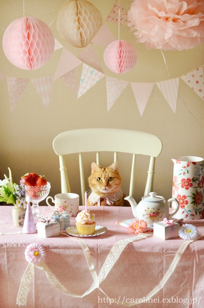 cat_sweets14