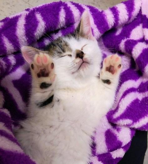 【猫画像】その両手は一体!?