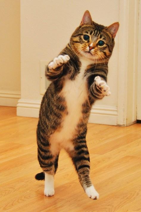 【猫画像】ジワジワくるポーズ