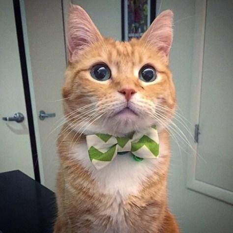 【猫画像】キメ顔