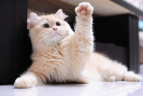 【猫画像】ハイッ!