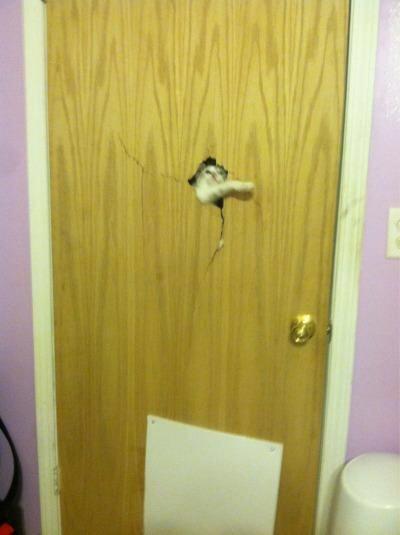 【猫画像】バリッ!ヤツが来たーΣ(゚д゚lll)